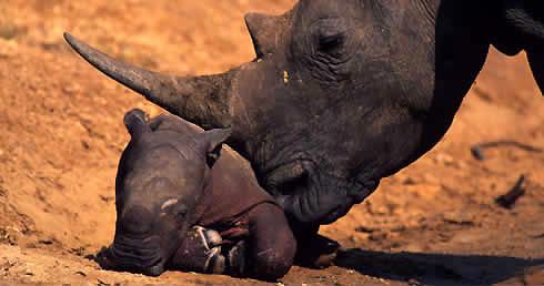 Forrás: WWF