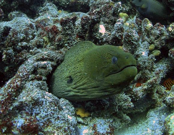 Forrás: MTI/AP/New England Aquarium/David Obura
