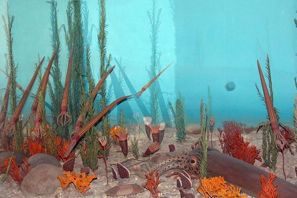 Forrás: Washingtoni Természettudományi Múzeum, Fritz Geller-Grimm, Wikimedia Commons