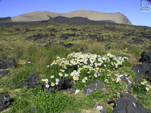 Forrás: surtsey.is