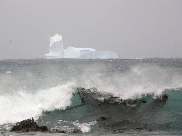 Forrás: Australian Antarctic Division/Eve Merfield