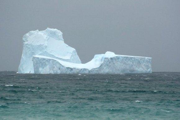 Forrás: Australian Antarctic Division/Jason Ahrens