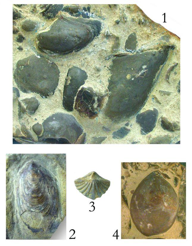 Forrás: Dulai Alfréd, Főzy István, Szente István