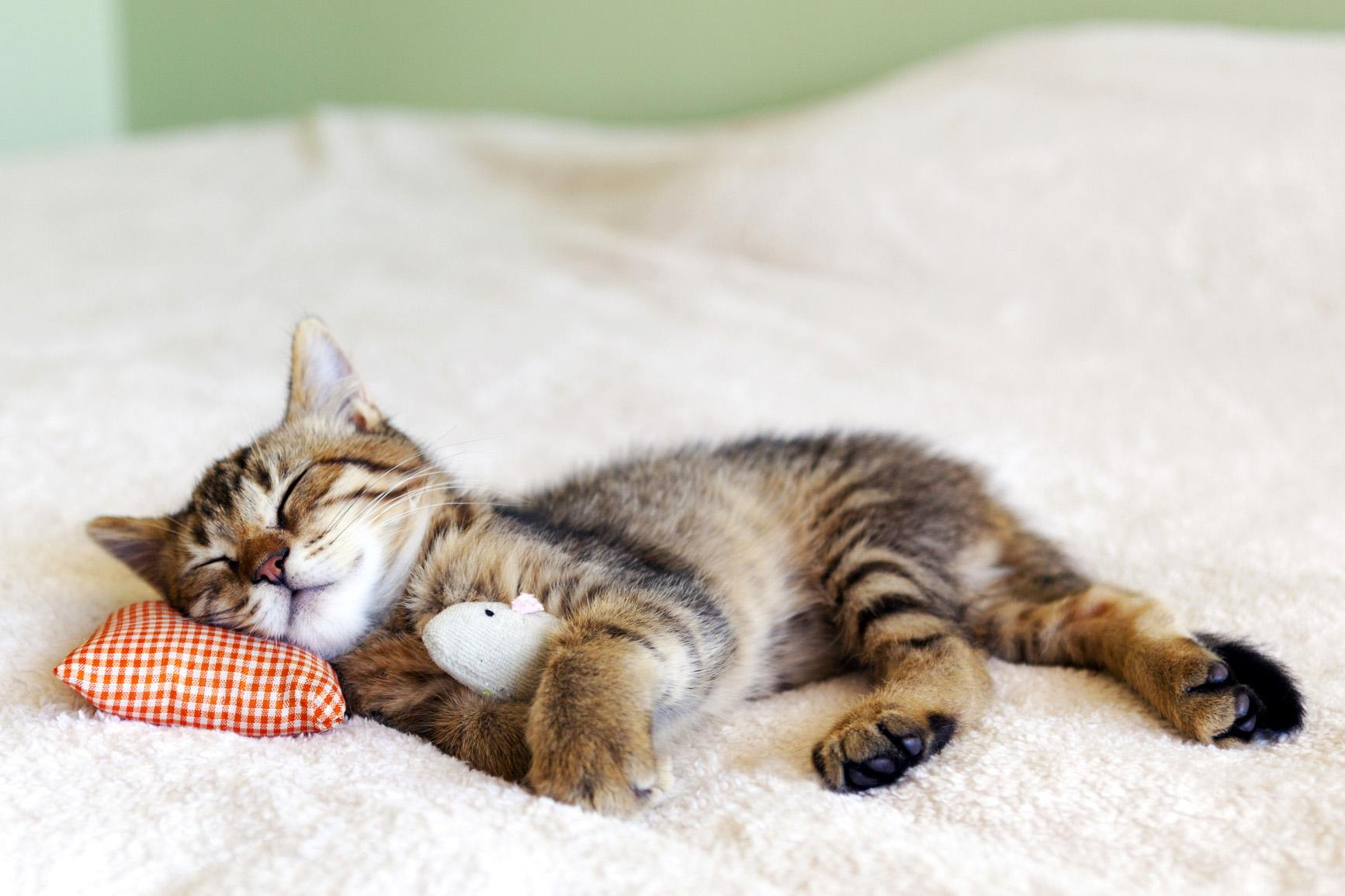 cute cat sleeping photo