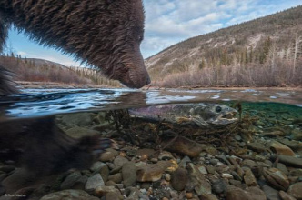 Forr�s: Wildlife Photographer of the Year